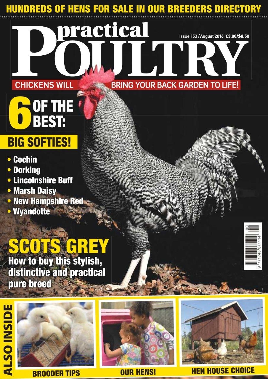 Practical Poultry Magazine Animal Magazines Pet Magazine Wyandotte