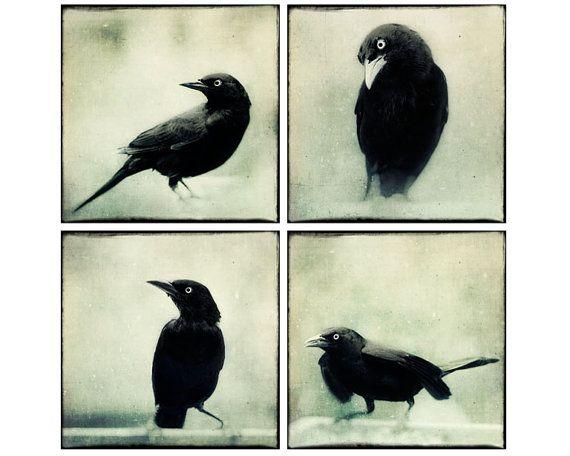 raven sie print set halloween kunst rabe kr he kunst schwarz wei fotos vogel foto set. Black Bedroom Furniture Sets. Home Design Ideas