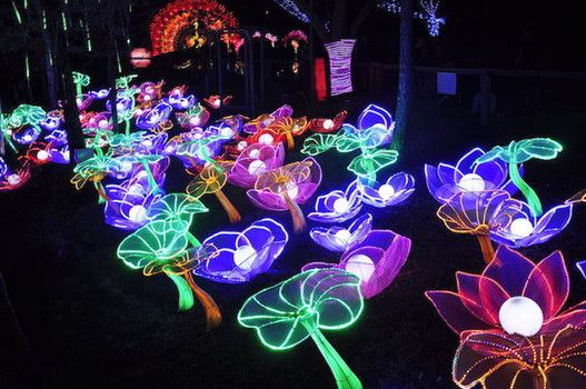 Lowry Park Zoo Christmas.Pin On Zoominations A Chinese Lantern Festival Of Lights