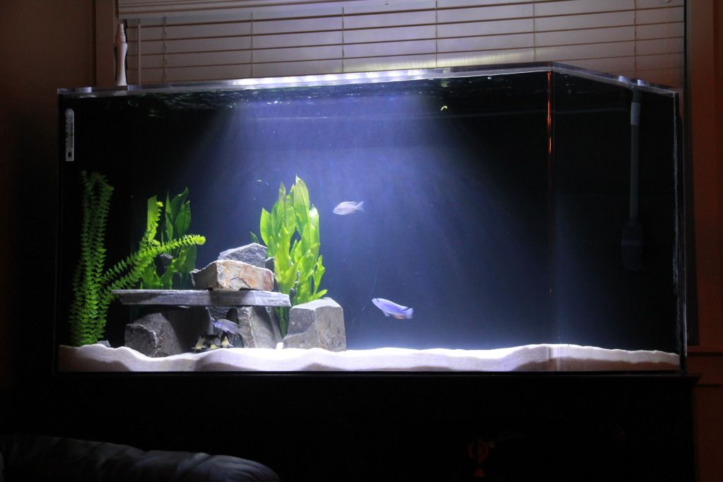 image result for simple fish tank fish