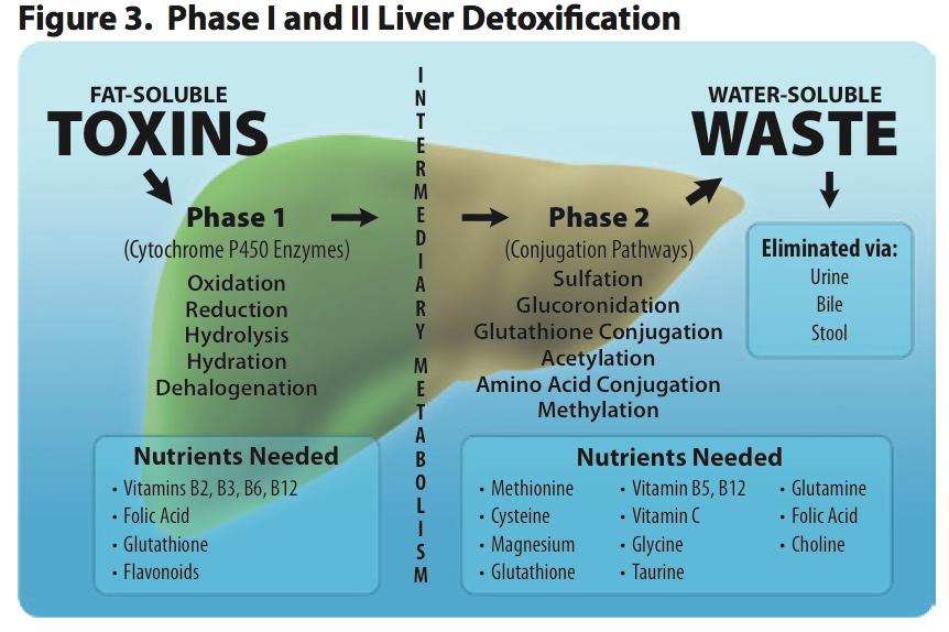 Phase i and phase ii liver detox pathways isagenix pinterest phase i and phase ii liver detox pathways ccuart Choice Image