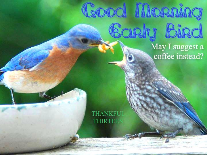 Great Early Bird Coffee