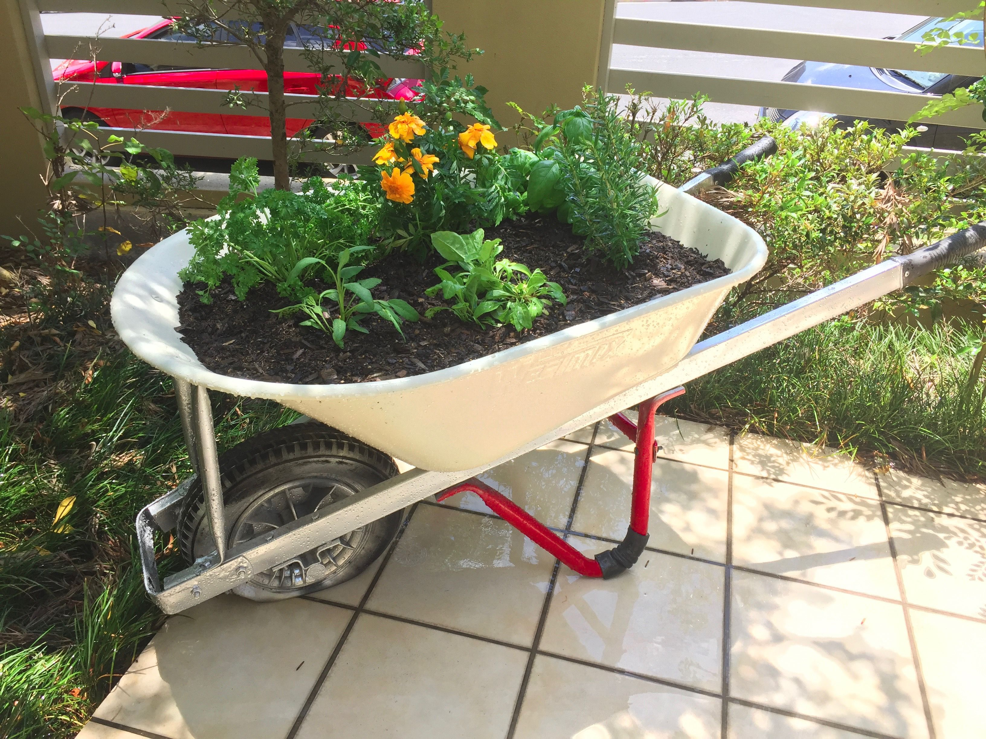 DIY Wheelbarrow Herb Garden Inner City Living Brisbane