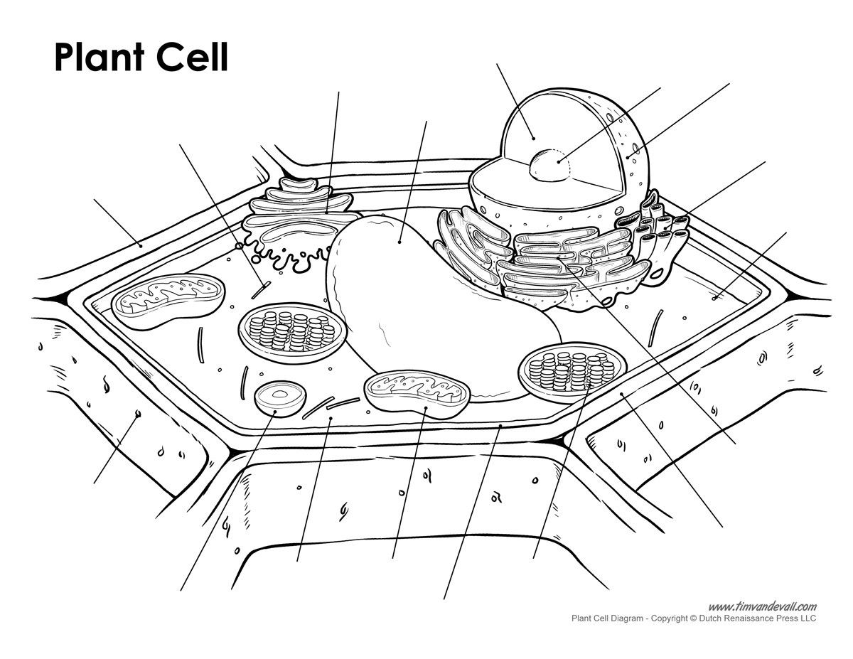 Blank Plant Cell Diagram Worksheet Elegant Blank Plant