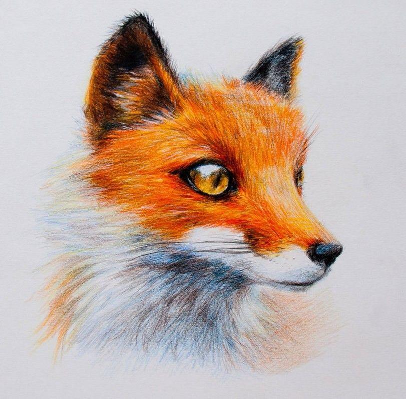 Картинки нарисованные карандашом животные цветные