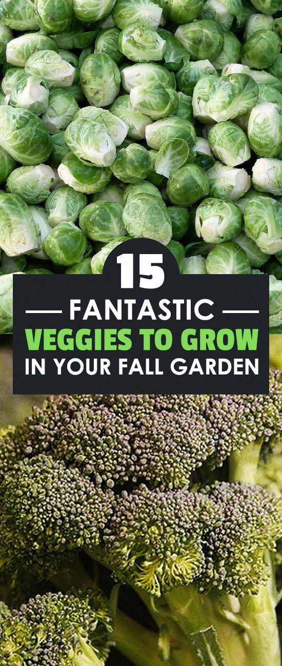 15 Fantastic Veggies to Grow in Your Fall Garden