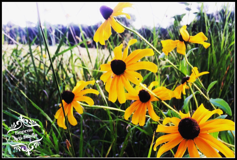 Black-eyed Susan Flowers - Wall Art, Summer Flower Photography, Home ...