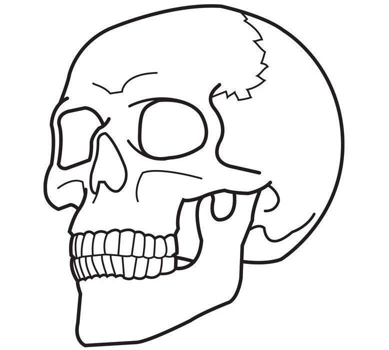 Amazing of Simple Sugar Skull Coloring Pages Have Skull C ...