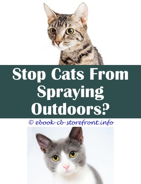 5 Inspired Tricks Does Neutering A Cat Stop Him From Spraying Frontline Spray For Cats Reviews Spray To Keep Cats Away From Christma Aerosol Sensible Sensores