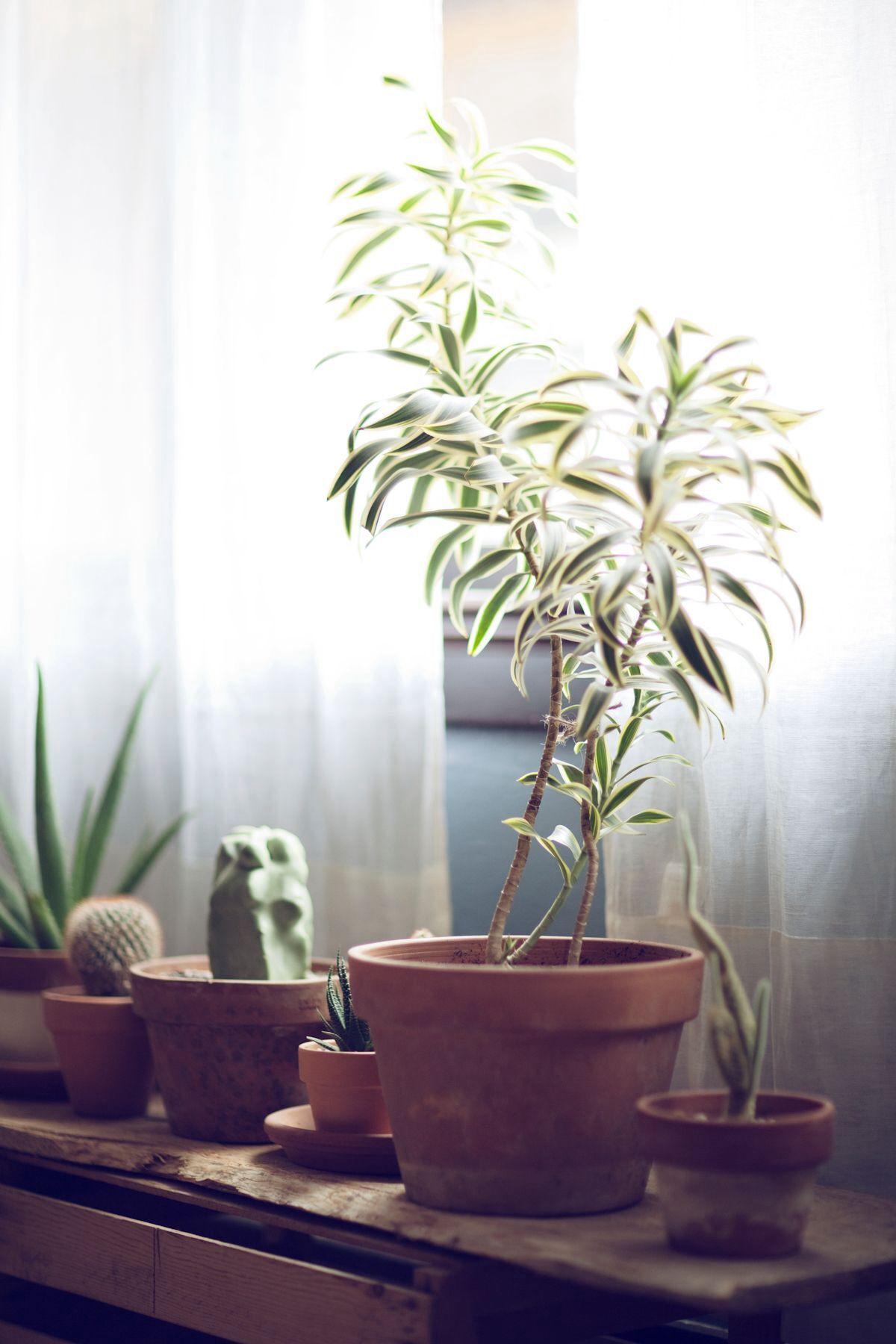 window plants room ideas pinterest plantes plante. Black Bedroom Furniture Sets. Home Design Ideas