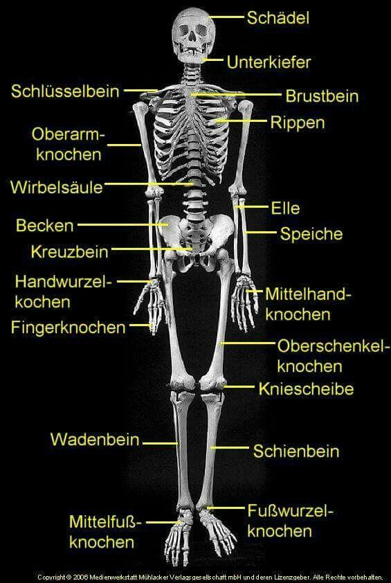 Pin by Joseline Mar on deutsch lernen | Pinterest | German, Language ...