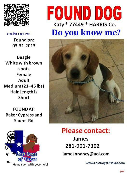 Founddog Katy Tx Losing A Dog Do You Know Me Dogs