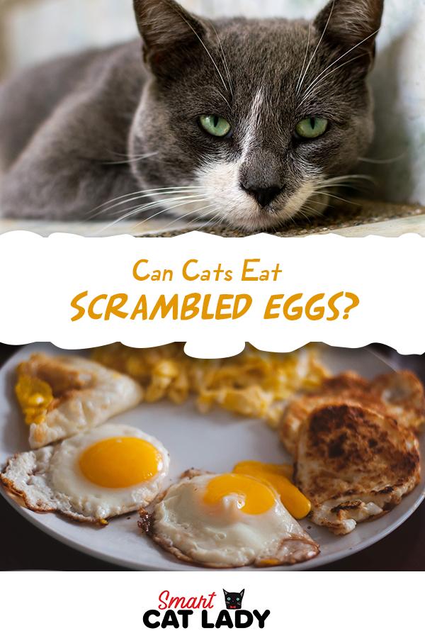 Can Cats Eat Scrambled Eggs Cat care tips, Eat