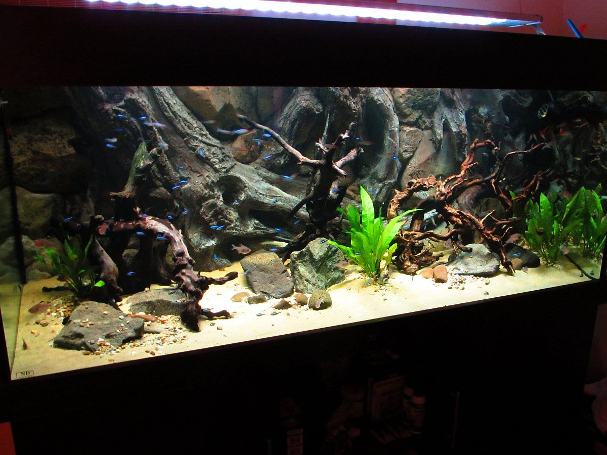 Zombie fish tank youtube - Amazon Background In A Large Aquarium With Neons Fish