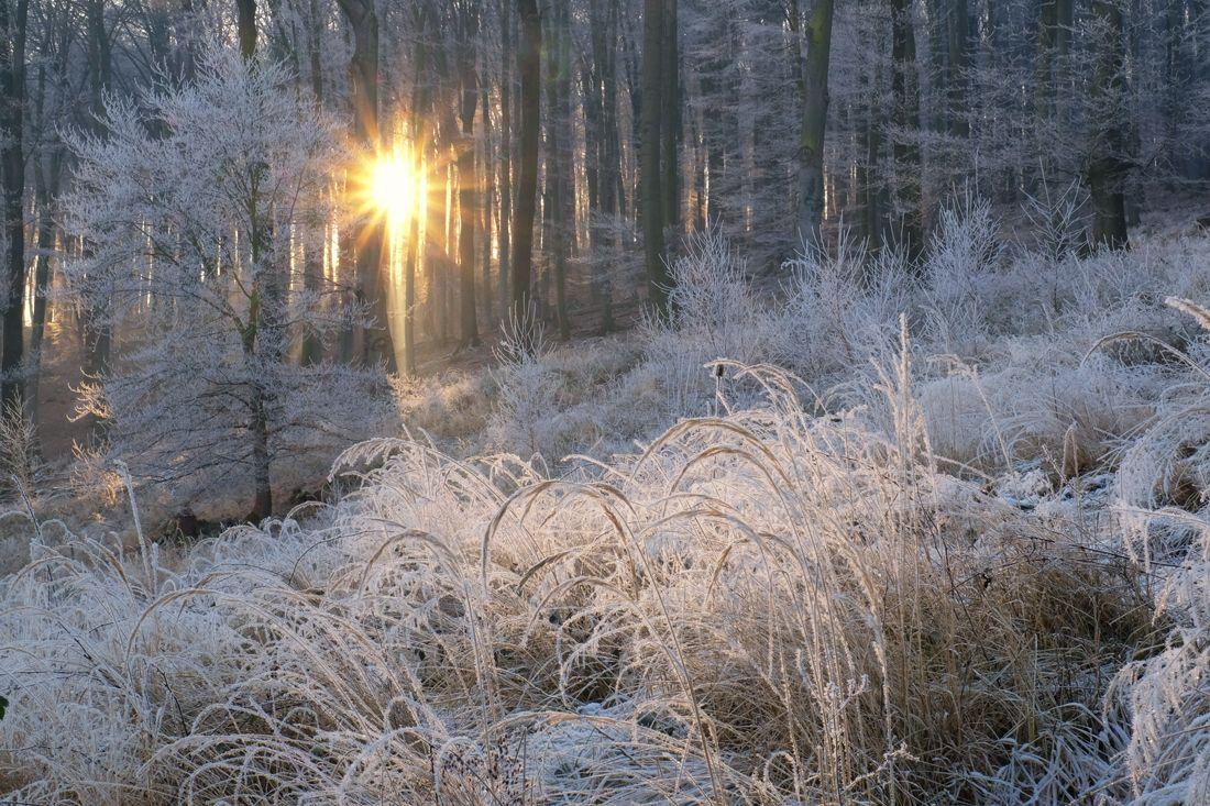 Ein Frostiger Tanz