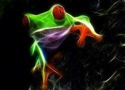 Żaba, Grafika