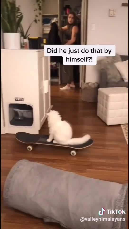 My cat likes to play with his skateboard 😅😂🥰