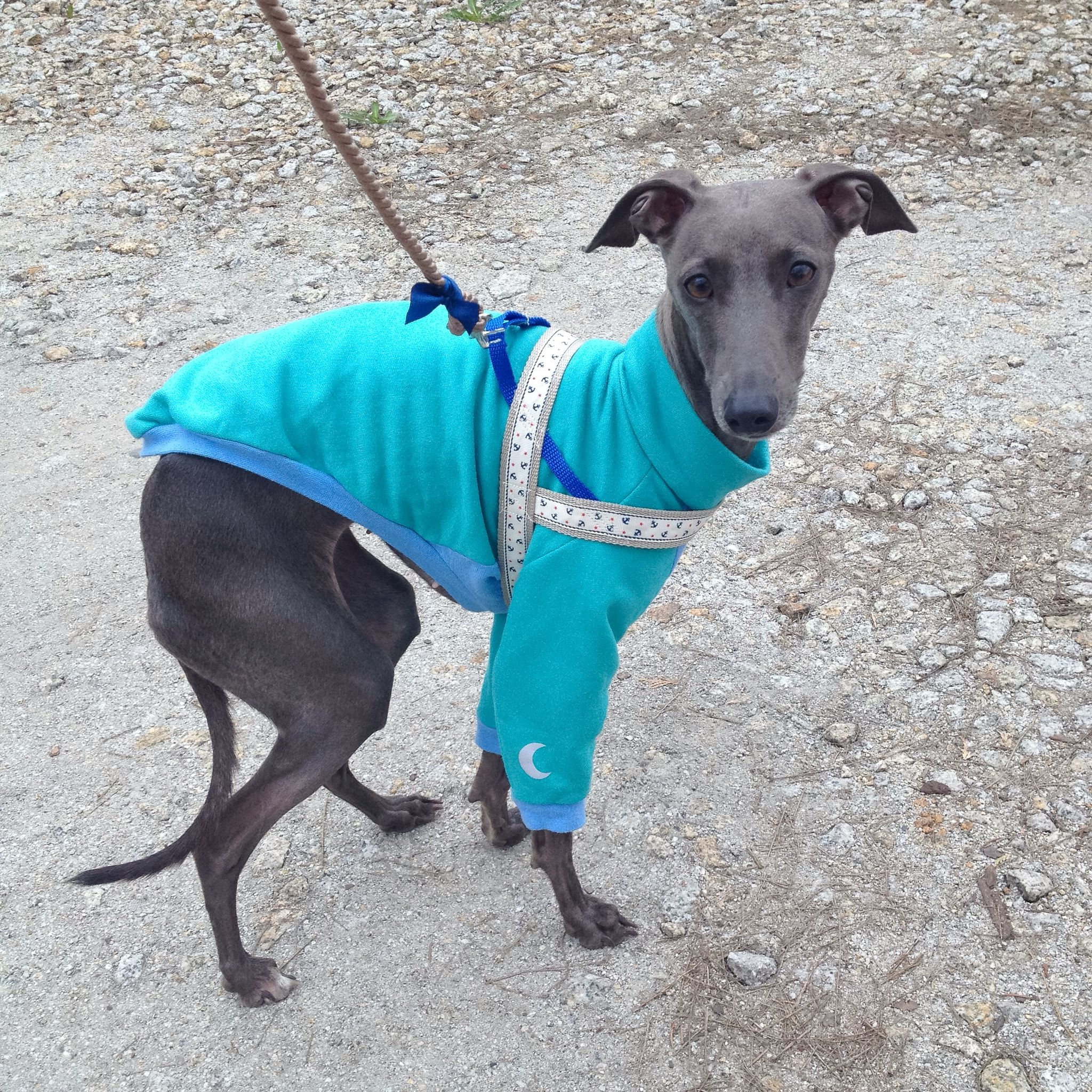 Italian Greyhound Clothing Available Here Www Figsandpoppies Com