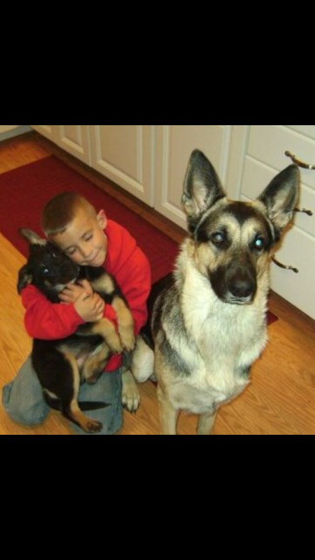 Wouldn't trust anyone more then I do out GSD to be by my sons side! Don't think I will ever own any other breed when it comes to trust, and loyalty.