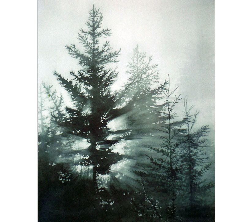 Watercolor Pine Trees   Pine Trees, Morning Fog, Daybreak