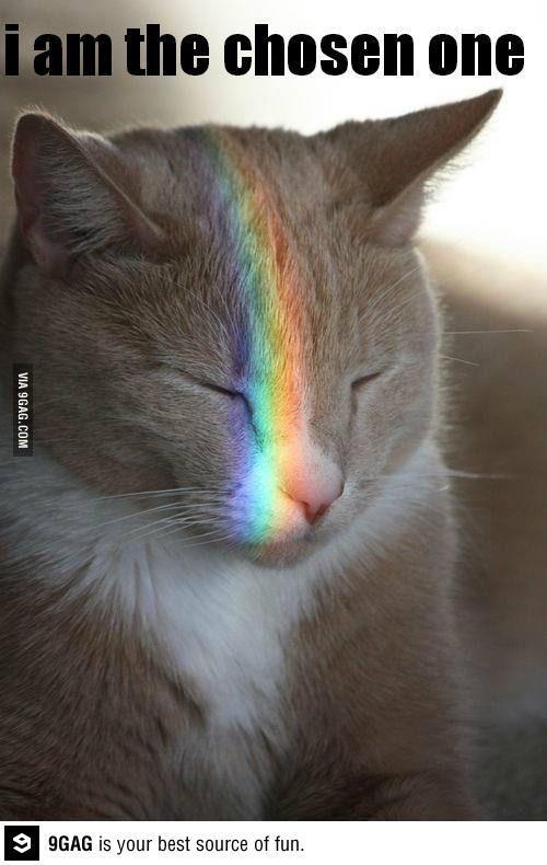 The nezt nyan cat