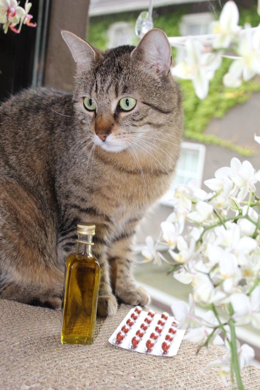 Schwarzkümmelöl Für Katzen