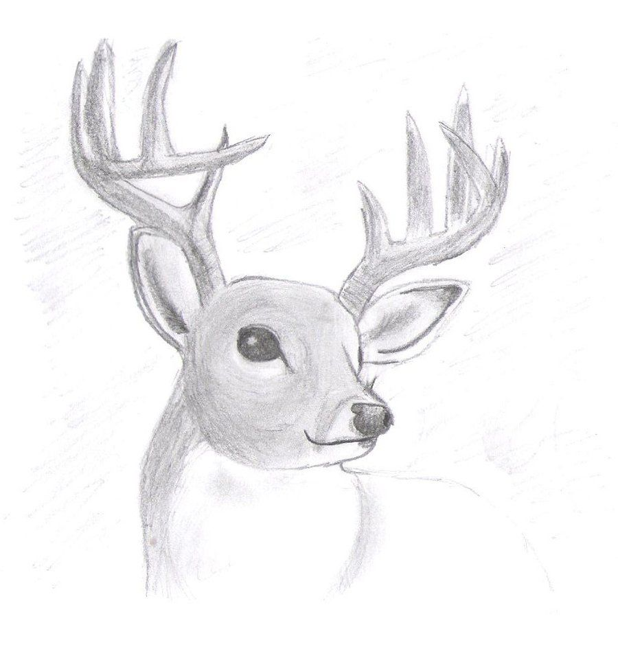 Image Result For Drawings Animals Easy Animal Drawings