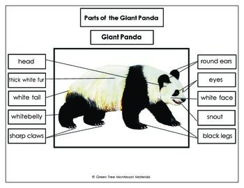 Giant Panda Printables: Label the parts of a Giant Panda12 Parts Printout with dashed boxes for cutting and gluing Sheet with the words at the bottom for writing   A control chart for independent work Also includes a fact sheet, and a Giant panda tracing card.