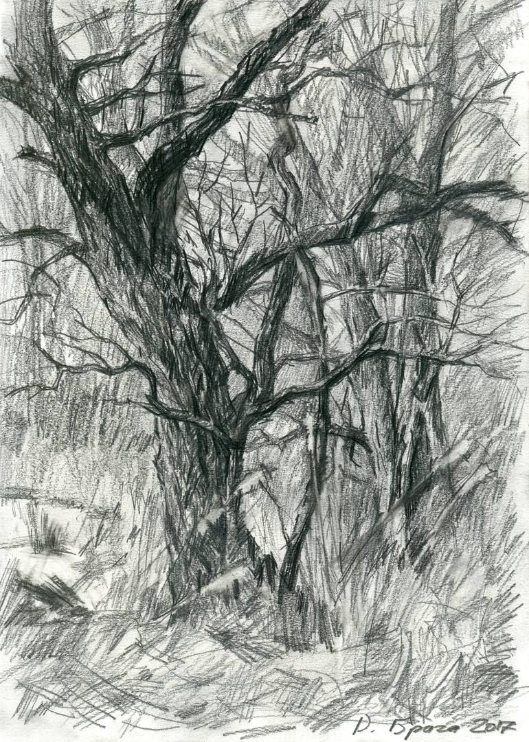 Plein Air 04 03 2017 Trees Drawing Landscape Drawings Tree Drawings Pencil Pencil Drawings