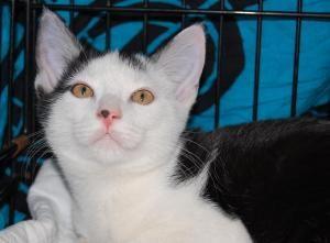 Adopt Nut On Cat Adoption Fur Kids Adoption