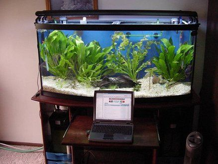 Aquarium Stand 72 Gallon Bow Front With Laptop Drawer