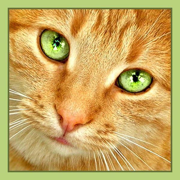 Light Orange Cat With Green Eyes