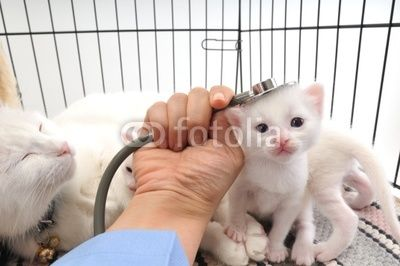 My Job Kittens White Kittens Cute Cats