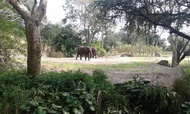 Elefantes maravillosos en Animal Kingdom