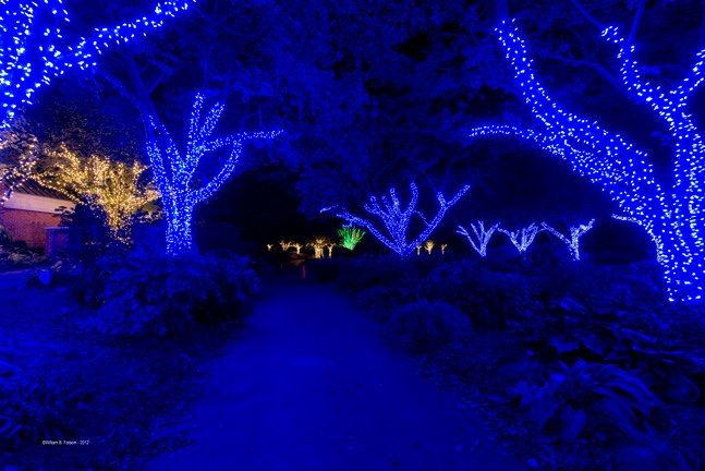 Meadowlark's Winter Walk Of Lights Meadowlark Botanical Gardens December 28