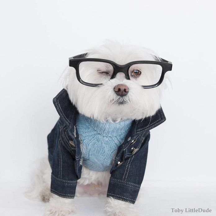 12 Dog Clothing Brands That Ll Have Your Pup Winning Best Dressed