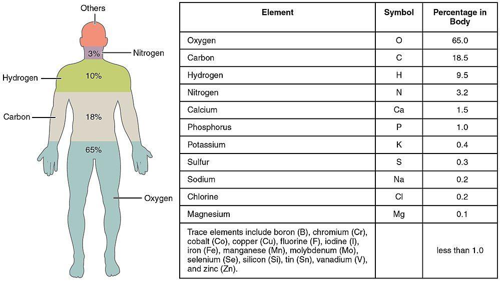 Human body - Wikipedia   Animal   Pinterest