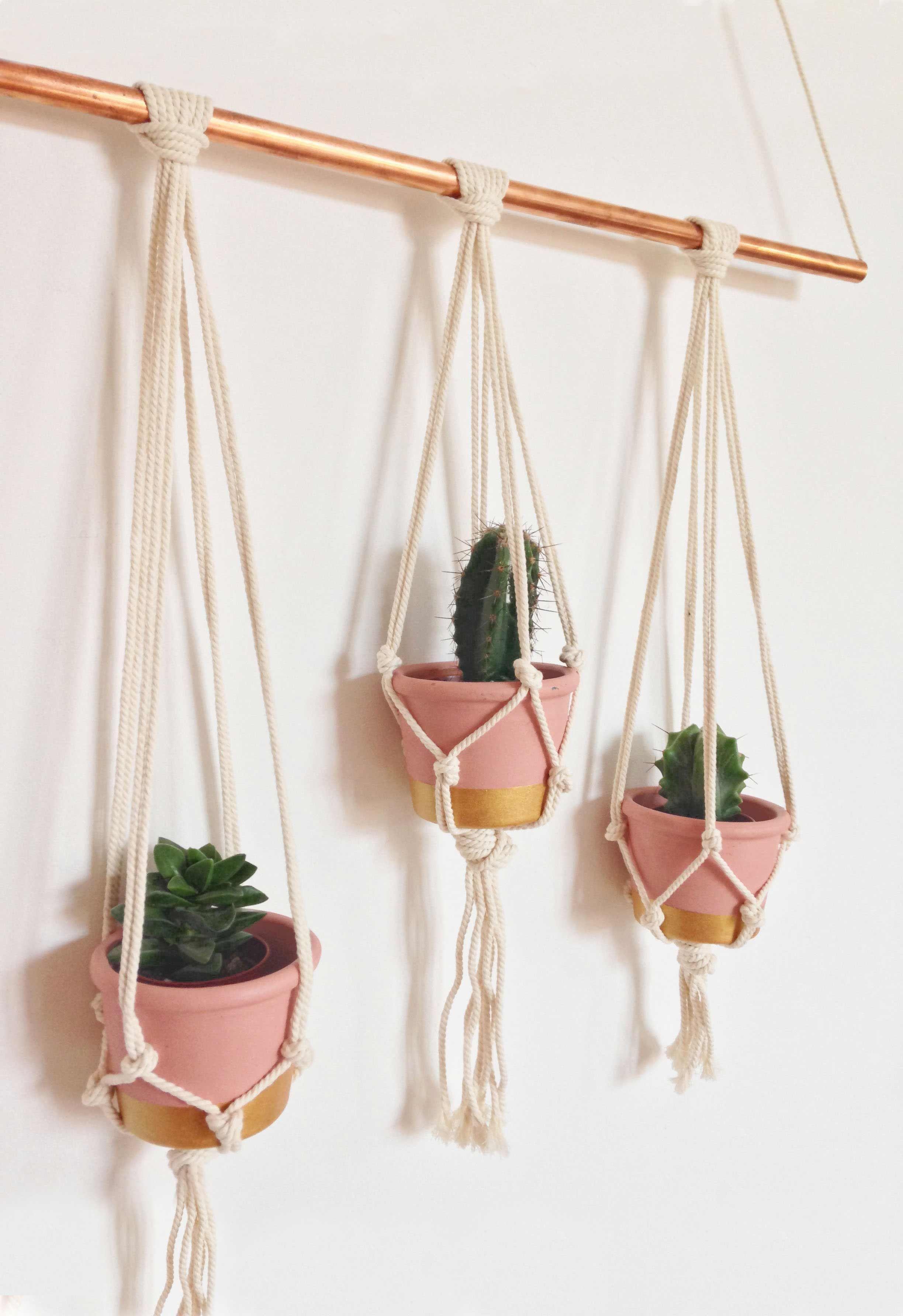 pingl par dani le sur succulentes cactus pinterest plantes suspension et macram. Black Bedroom Furniture Sets. Home Design Ideas