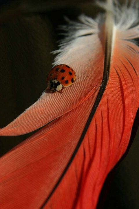 the lady finds a feather - © Karen Bacon