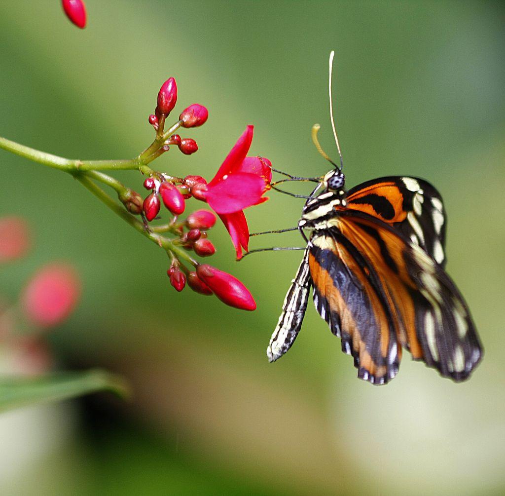 https://flic.kr/p/6tfESL | Beautiful Butterflies http://stores.ebay.com/crazy-weekly-discounts