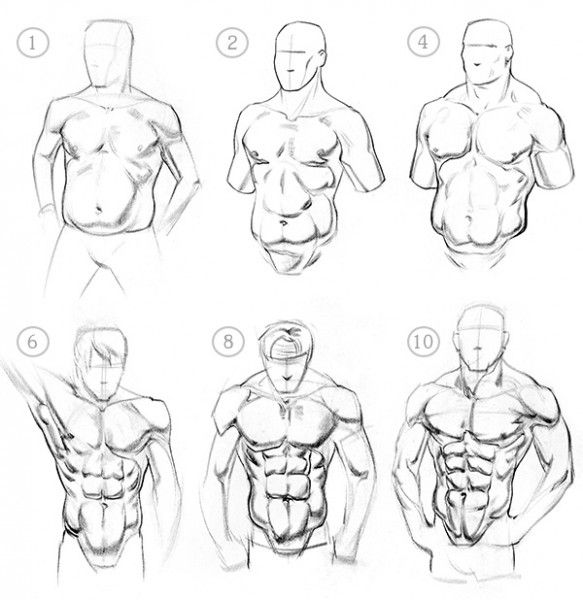 How To Draw Abs Anatomy