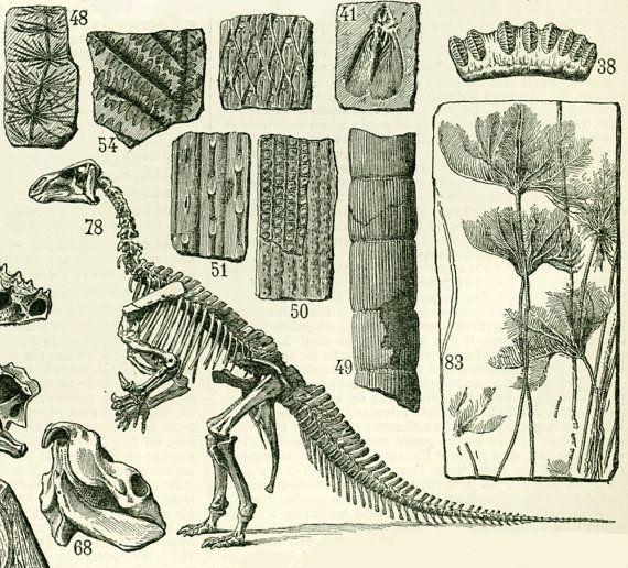1897 Paleontologie Dinosaure Fossile Trilobite Ammonite Etsy Antique Botanical Print Antique Prints Illustration