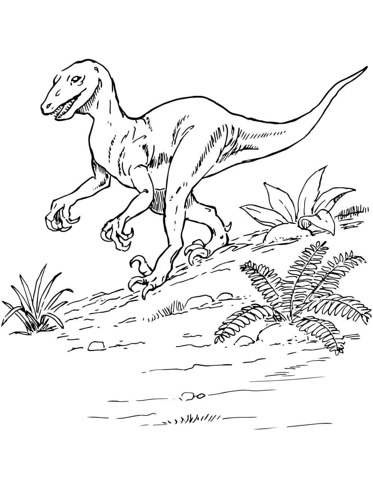 Top 35 Free Printable Unique Dinosaur Coloring Pages