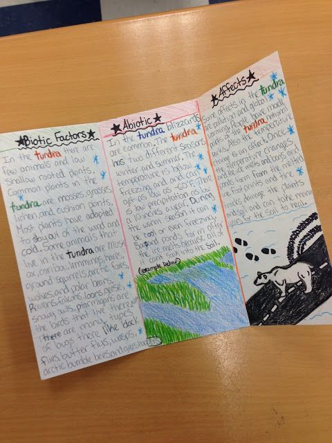 brochure templates for school project - amazing student work on an ecosystems brochure research