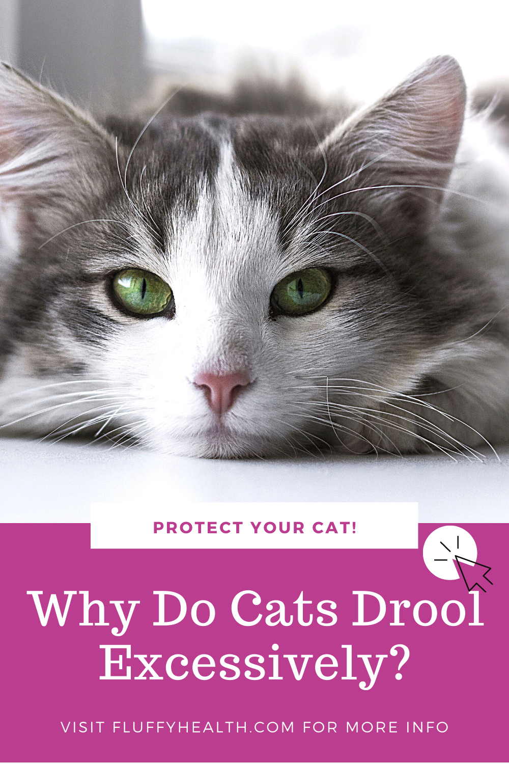 Why Do Cats Drool Excessively Fluffyhealth In 2020 Cat Drooling Cat Health Problems Cat Diseases