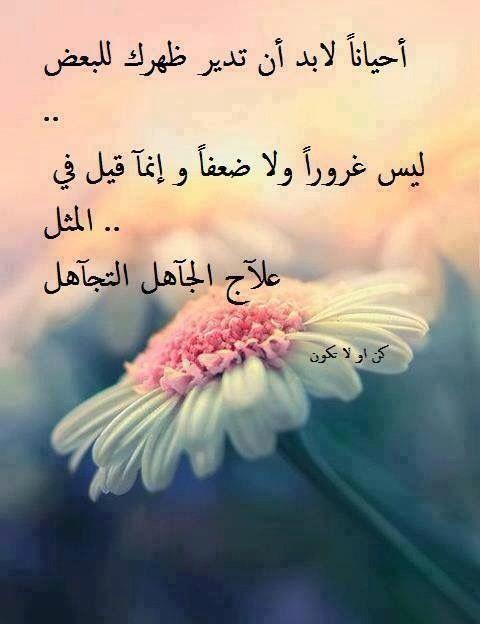 علاج الجاهل التجاهل Cool Words Arabic Proverb Proverbs