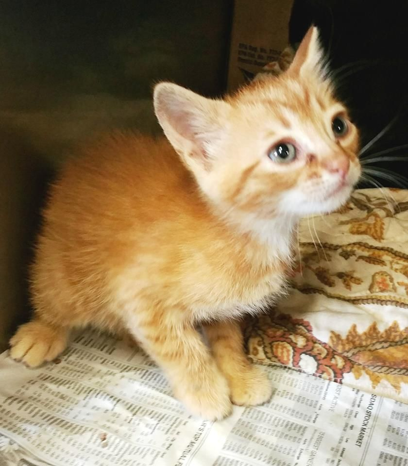 Available Pets Clayton County Animal Control Gatinhos