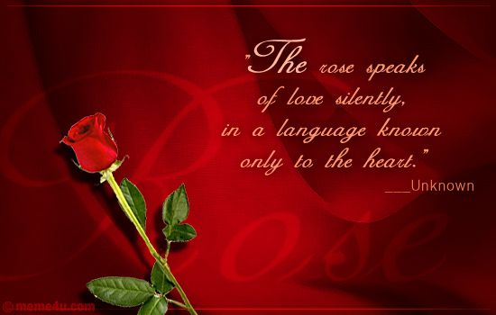 Rose Quotes Love Captivating The Rose Speaks Of Love Silently In A Language Known Only To The