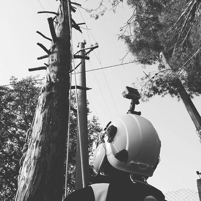 #interventispecialidimanutenzione #lavoriinquota #lavorisufune #treeclimbing #wild #work #mywork #ropeaccess #roperescue #taglioalberi #abbattimentocontrollato #husqvarna #chainsaw #edilizia #altezzanonconta