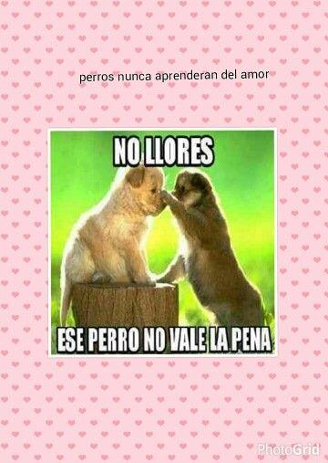 Perros Cuando Aprenderan Del Amor Funny Animals Cute Animal Memes Funny Animal Memes